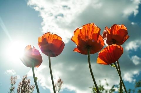 flower-399409_1280